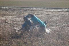 064 Silken Windsprite Welpen