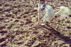 IMG_20141028_154117 Silken Windsprite Welpen
