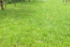 img_9924 Silken Windsprite Welpen
