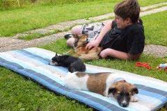 Hunde 107 Silken Windsprite Welpen