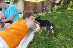 Hunde 158 Silken Windsprite Welpen
