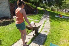 Hunde 170 Silken Windsprite Welpen