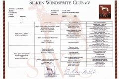 pedigree Silken Windsprite Welpen