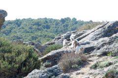 _DSC5461 b Silken Windsprite Welpen