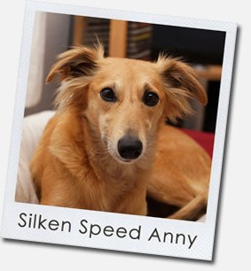 Silken Speed Anny