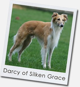 Silken Windsprite - Darcy of Silken Grace