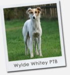 Wylde Whitey Plays the Blues