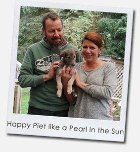 Happy Piet like a Pearl in the Sun