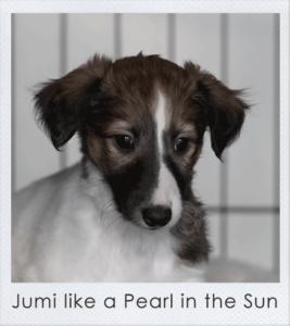 Jumi like a Pearl in the Sun