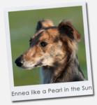 Ennea like a Pearl in the Sun