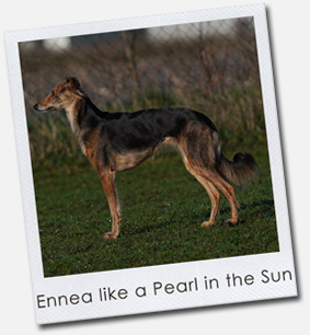 Ennea like a Pearl in the Sun