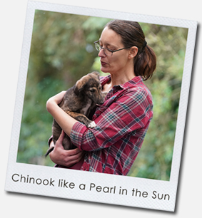Chinook like a Pearl in the Sun