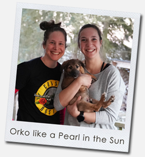 Orko like a Pearl in the Sun