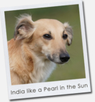 India like a Pearl in the Sun