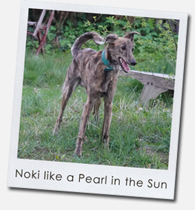 Noki like a Pearl in the Sun